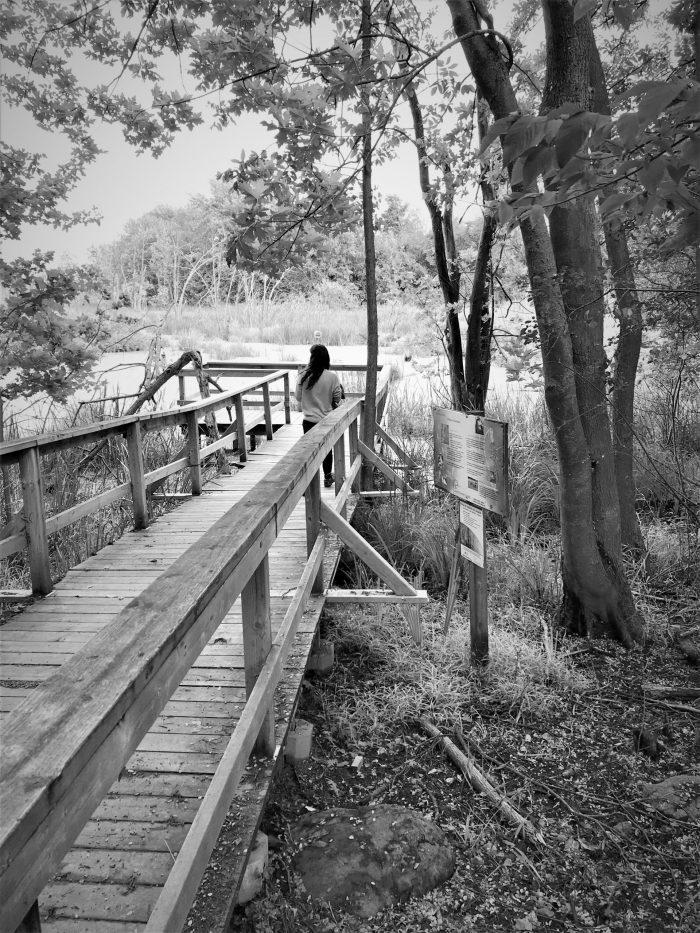 Interpretive trails and a