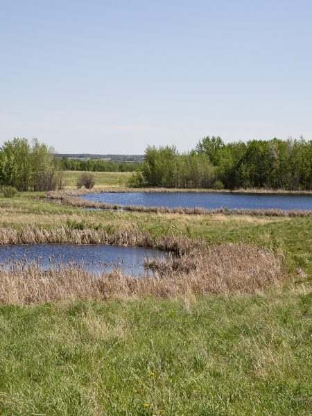 The Camrose Creek Research Project