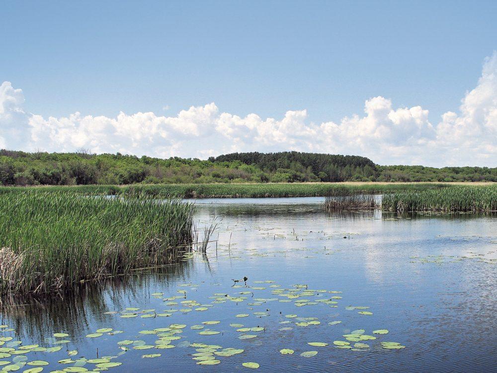 Saskatchewan River Delta