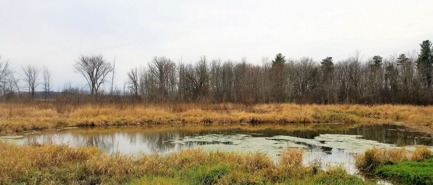 The Sharp family's new pair pond and grassland are downriver of the Rideau River Migratory Bird Sanctuary in a region where thousands of ducks and geese rest and feed during migration.