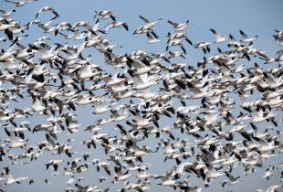 Migratory milestones