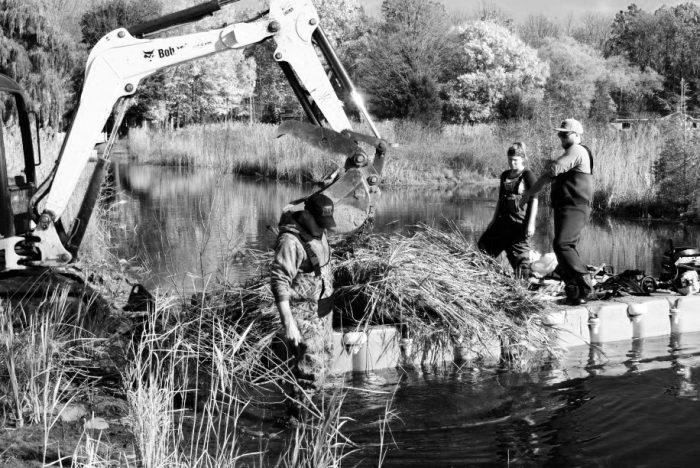 The Lambton Shores Phragmites Community Group tries to keep up with invasive phragmites on their local shorelines on Lake Huron.