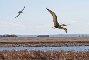 Long-lost species returns to the prairies