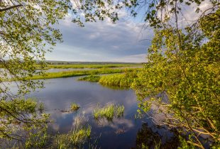 Lessons in adaptation help address sea-level rise at Musquash Marsh