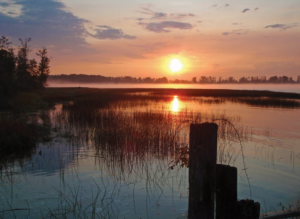 The Fraser River Estuary is the largest estuary along the B.C. coast.