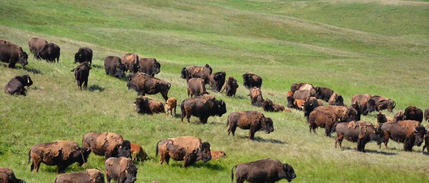 The plan is to have something that is sustainable for our children, for the bison and cattle, and for the wildlife and waterfowl, for years and years to come.