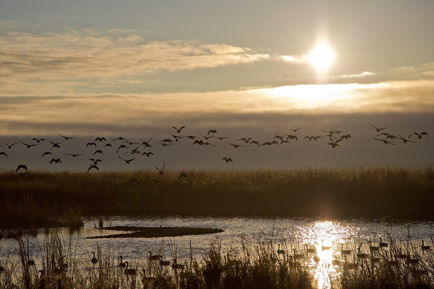 New report on the role of wetlands in removing phosphorus to protect lakes in Ontario