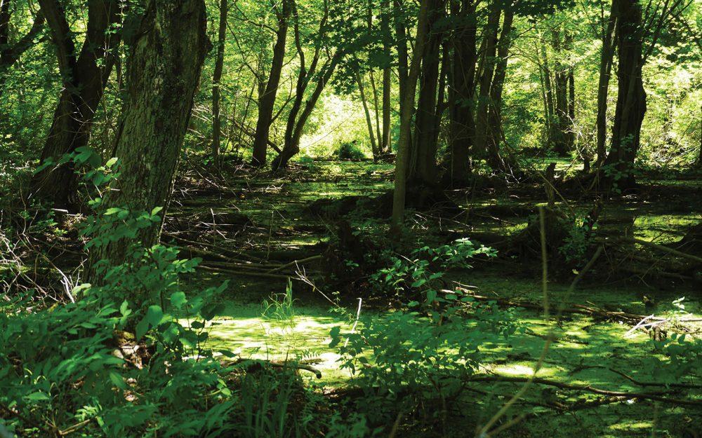LaSalle Marsh provides exceptionally productive habitat on Big Sandy Bay.