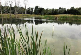 How much can wetlands help reduce summer algae outbreaks?