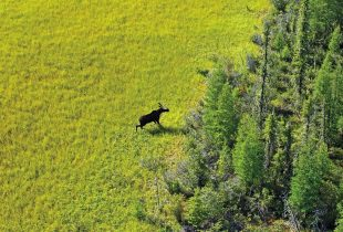 Celebrate N.W.T. Biodiversity on World Wildlife Day