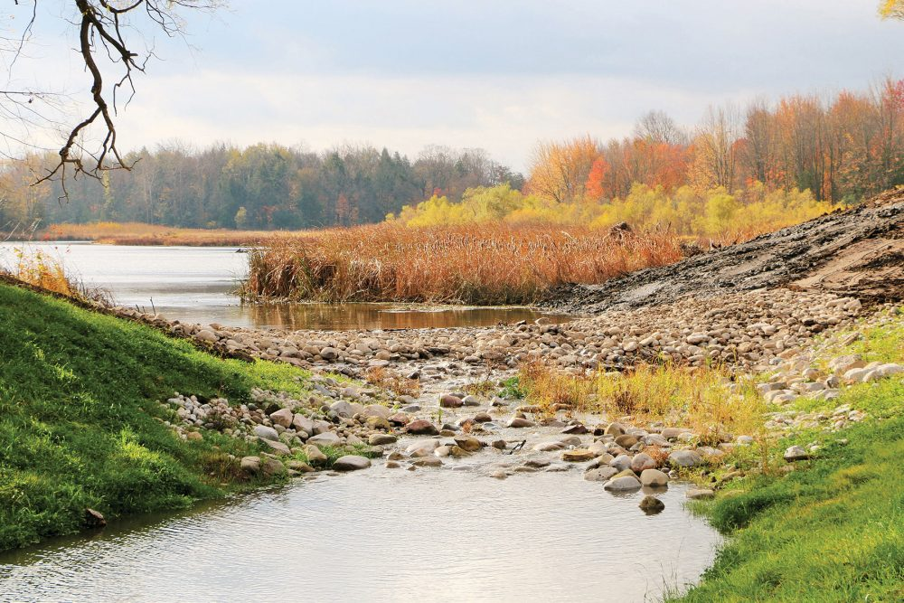 Through restoration work by Ducks Unlimited Canada and its partners, Cedar Creek has reverted to its original watercourse and its bed has been strewn with rocks and logs that shade fish and give turtles places to bask.