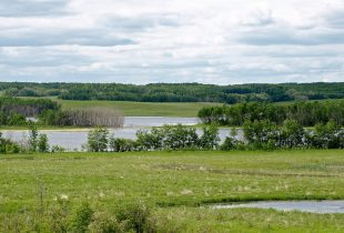 Vote for wetlands: make your voice heard