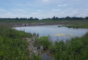 Ducks Unlimited Canada Builds Rural Wetlands that Improve Water Quality