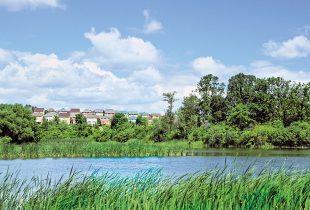 Big News for Ontario Wetlands