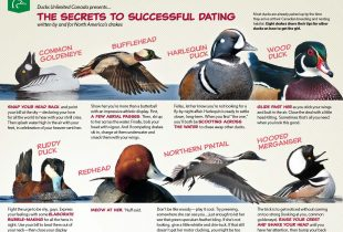 The secrets to successful dating, written by and for North America's drakes