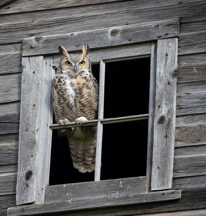 """""""There's this place just outside of Blucher where we see both great horned owls in the summer and fall and snowy owls in the spring. It is the best place for wildlife."""""""