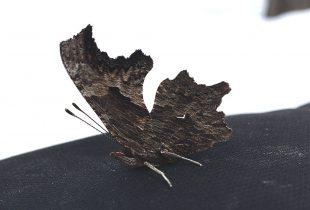 A butterfly in winter
