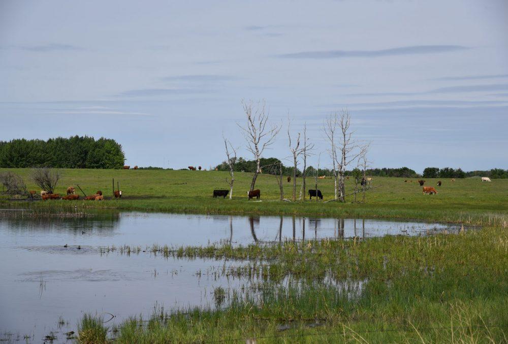 Wetland restoration continues in Alberta