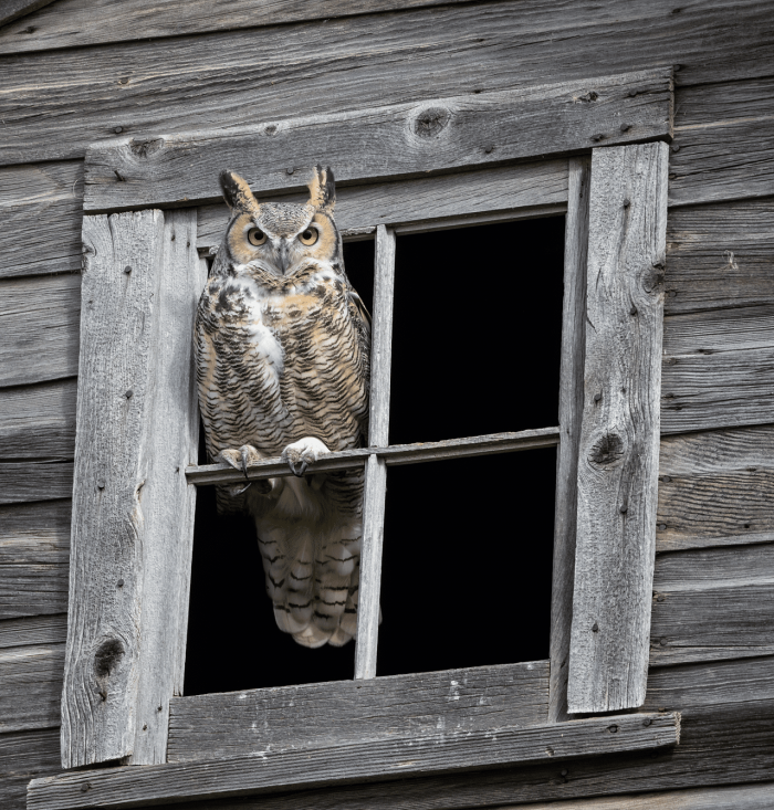 """There's this place just outside of Blucher where we see both great horned owls in the summer and fall and snowy owls in the spring. It is the best place for wildlife."""