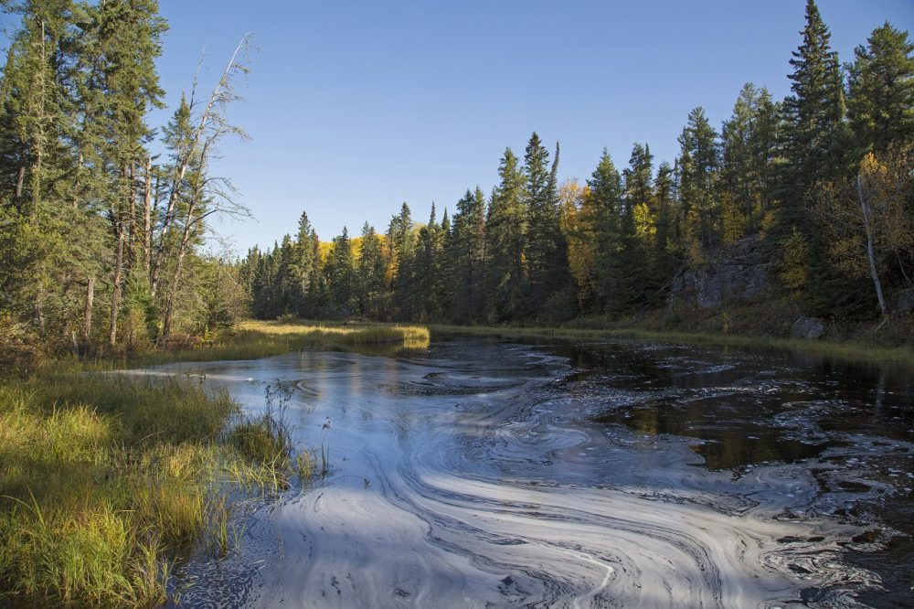 Boreal forest wetland.