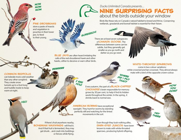 Nine surprising facts about the birds outside your window