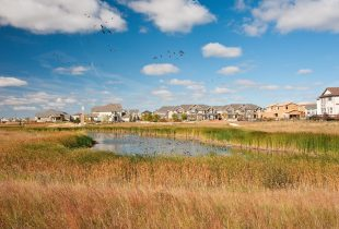 New Report on Leveraging Water Management with Wetlands for a Climate-Ready Ontario