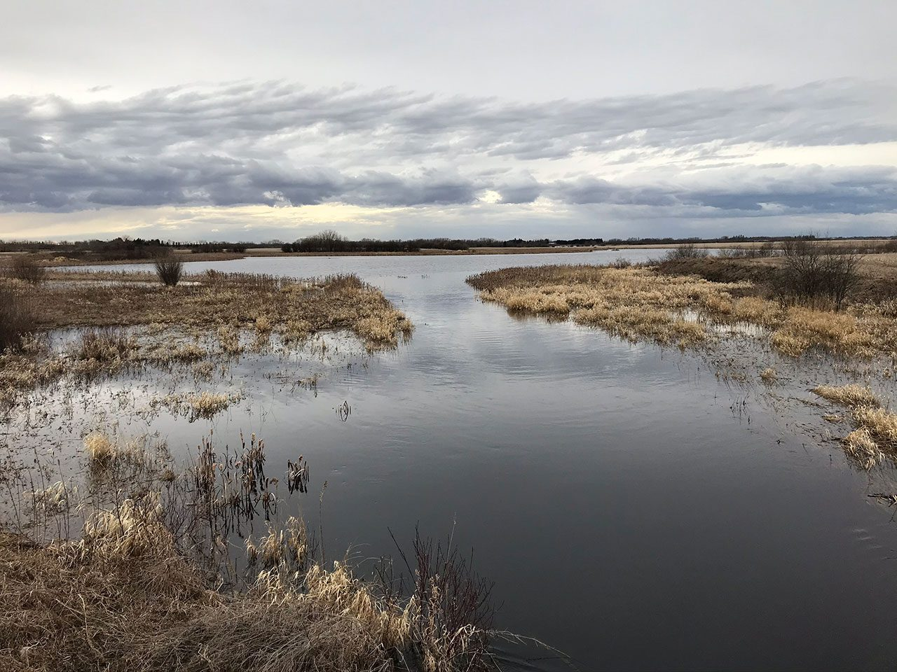 Parkland, Alberta wetland - Spring 2020