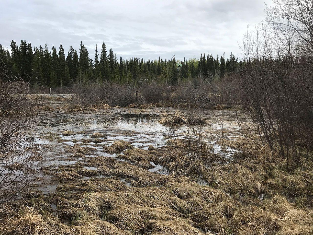 boreal wetland - Spring 2020