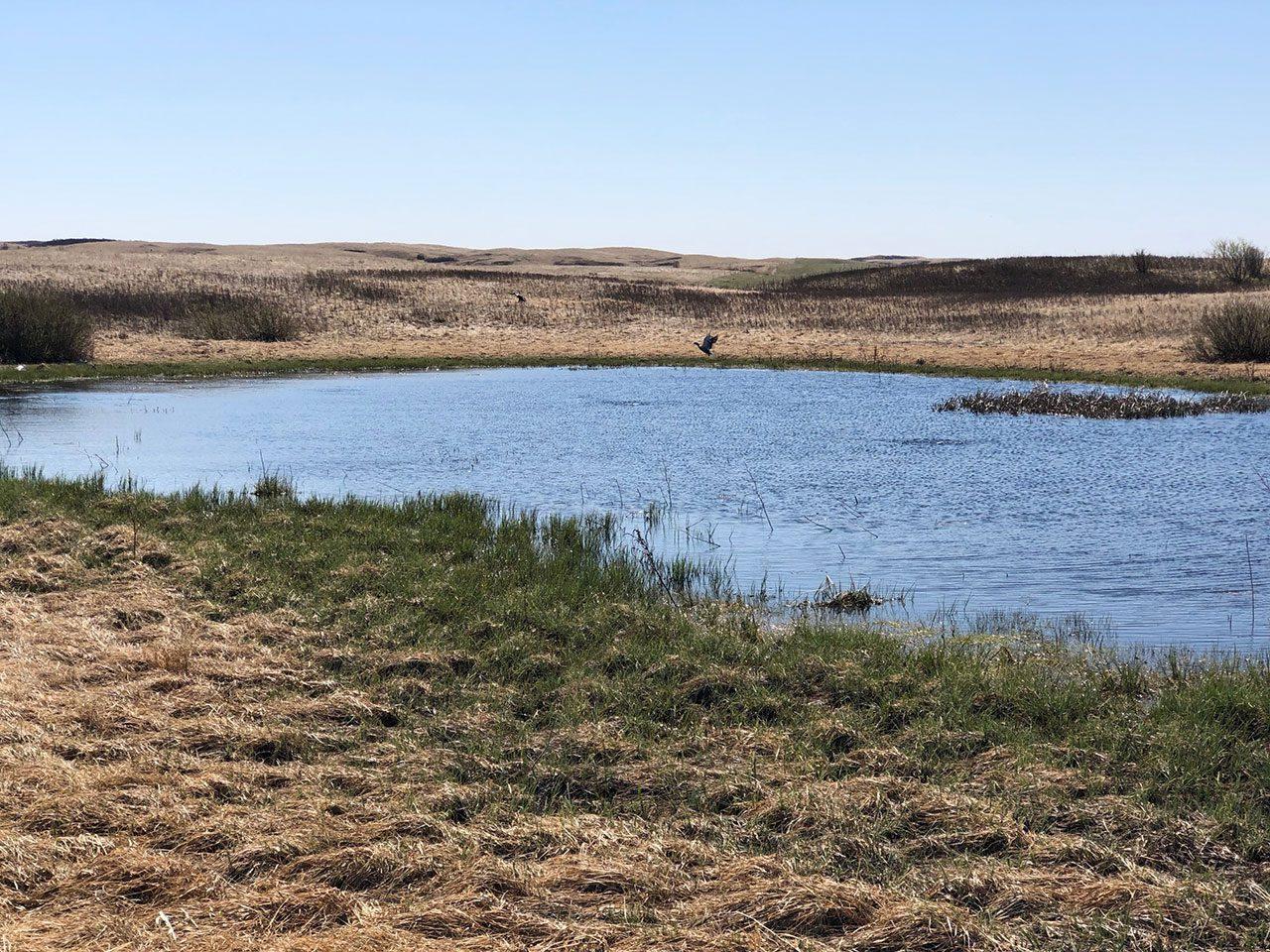 Southern Saskatchewan wetland, spring 2020