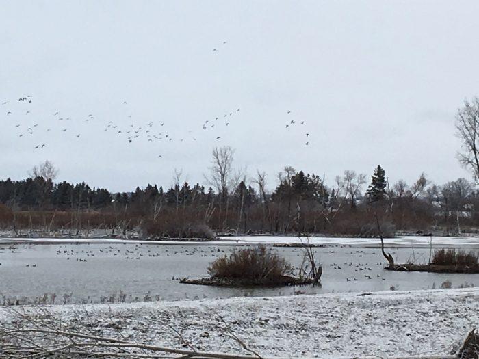 The Aylmer wetlands provide habitat in all seasons.