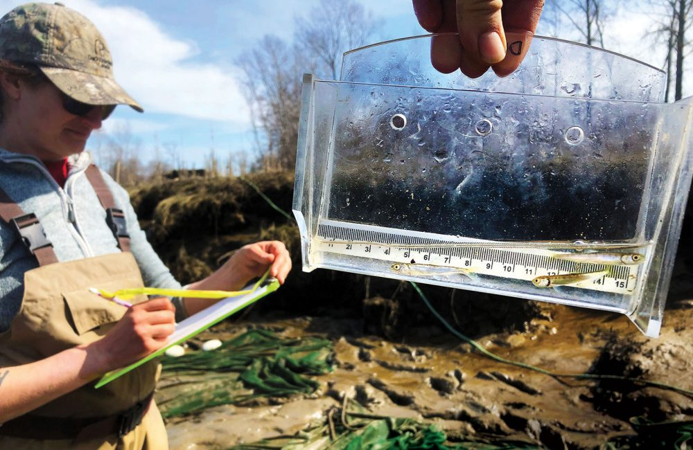 DUC conservation program specialist Sarah Nathan tracks juvenile chinook salmon on the Fraser River Estuary as part of the federal government's Coastal Restoration Fund project.