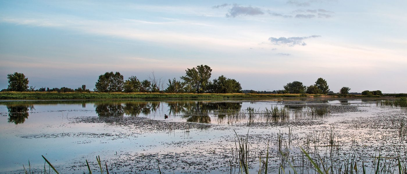 A viewing tower to be built at Ruisseau de Feu will provide a 360-degree view of the site, including this main wetland, restored by DUC and its partners.