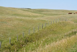 Voices unite to protect Alberta's grasslands