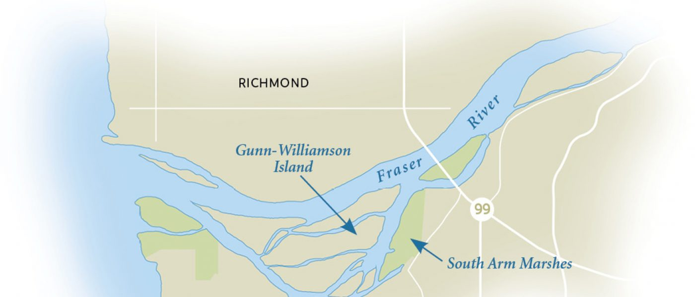 The heart of the Fraser River Estuary is home to the largest producer of salmon on the entire Pacific coast.