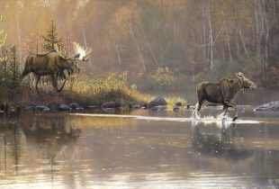 Canadian artists help paint a positive future for conservation