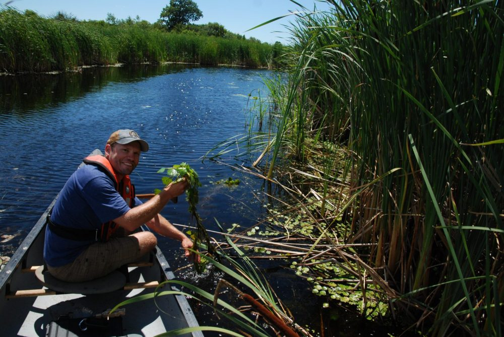 DUC's Kyle Borrowman working from a canoe in the coastal wetlands of Wolfe Island.