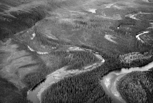 Canada's boreal forest has many regions that share a common truth