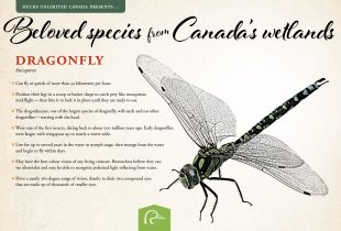 Beloved species from Canada's conserved wetlands