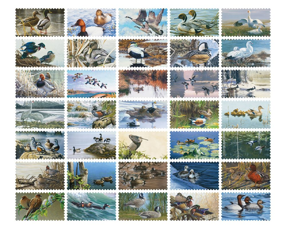 Thirty-five years of Canadian Wildlife Habitat Conservation Stamp sales have led to impressive investments in waterfowl habitat.