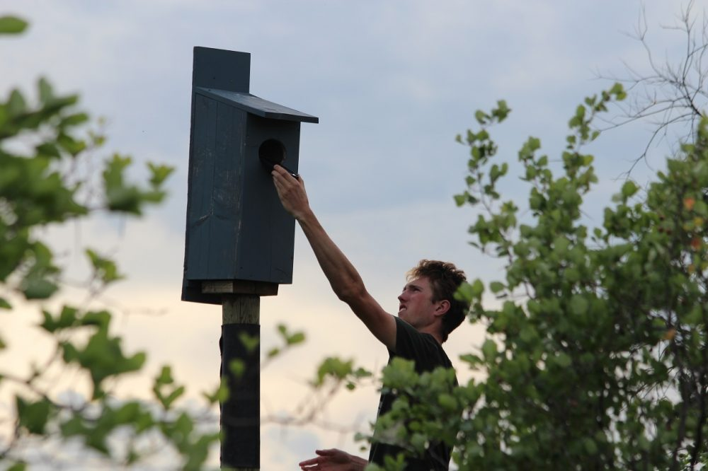 Evan Musgrove checks one of his wood duck nest boxes in Oakbank, Man. on June 14, 2020.