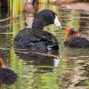 Image of Duck Navigator