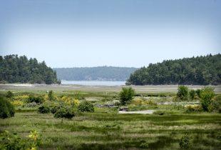 Wetland and Estuary Acquisition