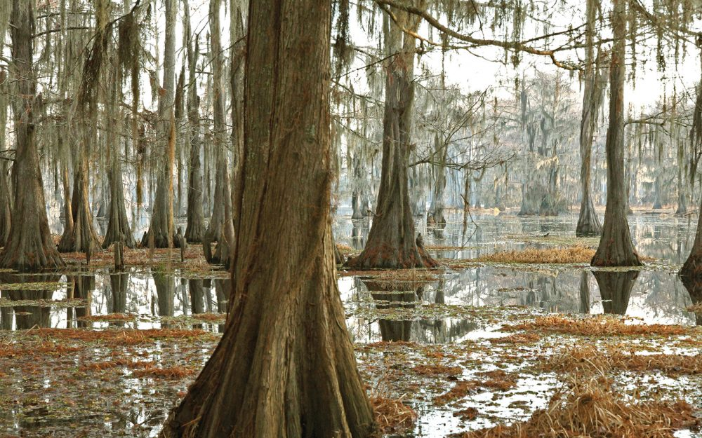 Hauntingly beautiful, bottomland forested wetlands like this cypress swamp in the Mississippi Alluvial Valley offer critical food and shelter for wood ducks and mallards, as well as a host of ecological functions important to people, including recreation and flood control.