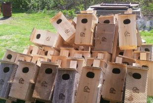 Home-builders for ducks