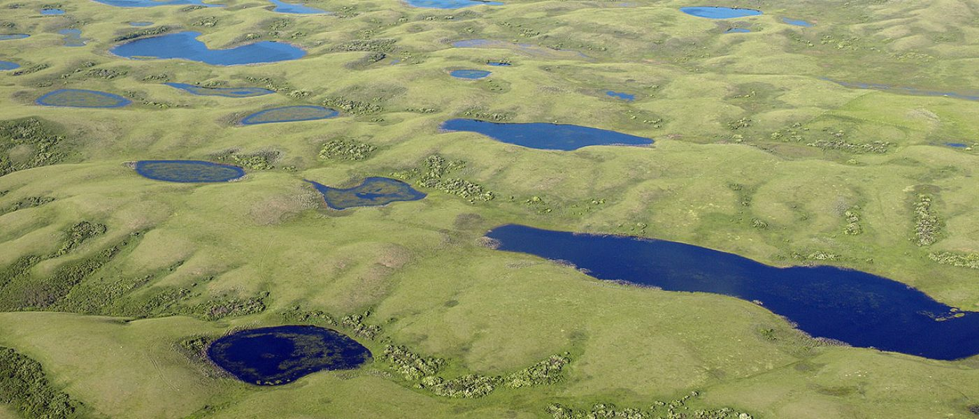 Top Priority: waterfowl breeding landscapes