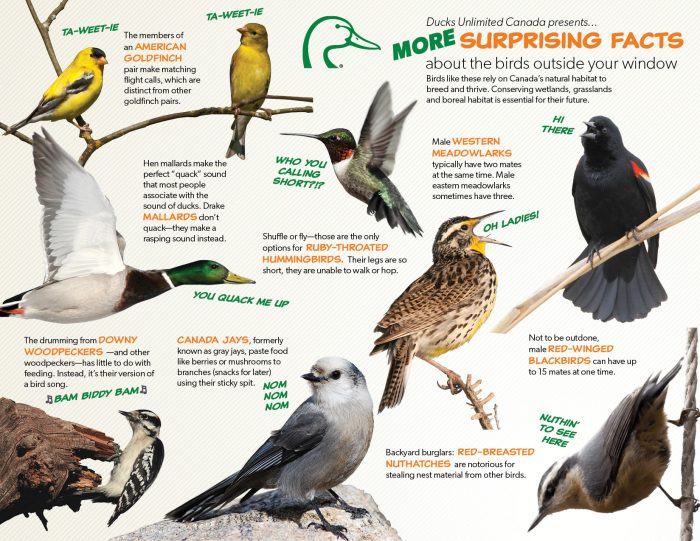 More surprising facts about the birds outside your window