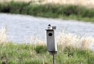 Nest Box Maintenance Program