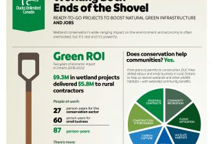 """Wetland conservation: an investment in """"green jobs"""""""