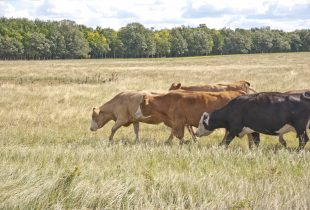 Forage program offers farmers a financial break