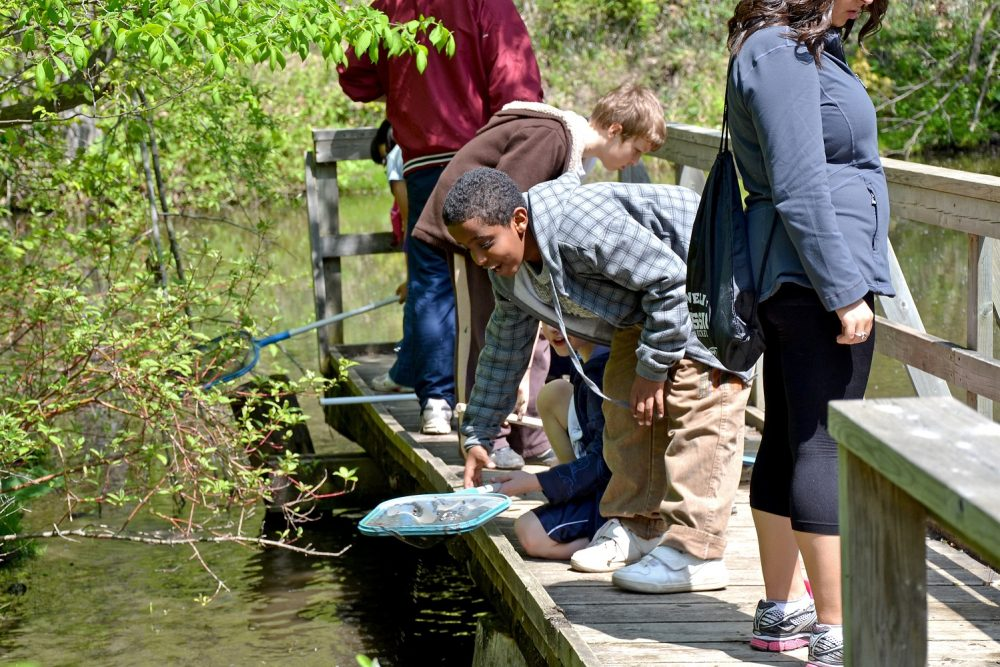A student enjoys critter-dipping from a wetland boardwalk.